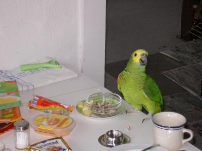Papagei zum Frühstück