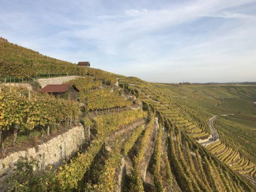 Weinberge zwischen Mundelsheim und Hessigheim